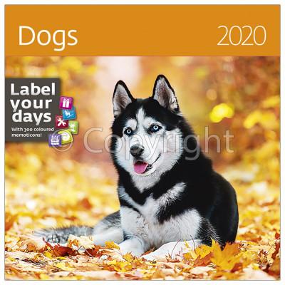 - Dayliner falinaptár - Dogs LP 2020