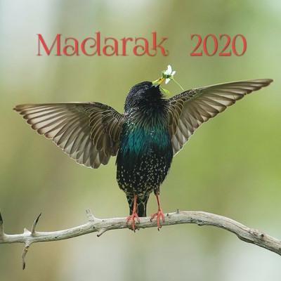 - Madarak - Lemeznaptár - 2020