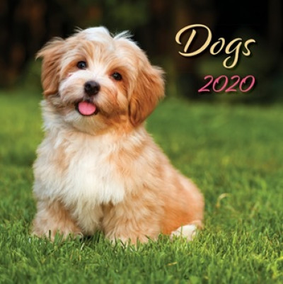 - Dogs Lemeznaptár - 2020