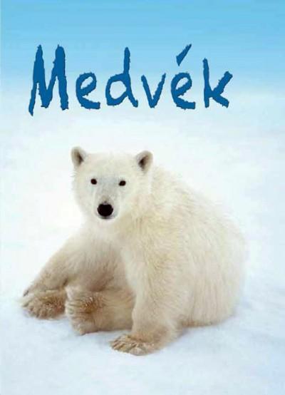 - Kis Könyvtár - Medvék
