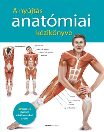 - A nyújtás anatómiai kézikönyve