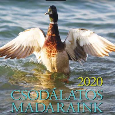 Telegdi Ágnes - Csodálatos Madaraink naptár 19x19 cm - 2020